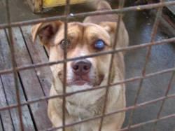 Вспомним Майка : добрый пес с бельмом на глазу.Был отловлен 25 февраля...