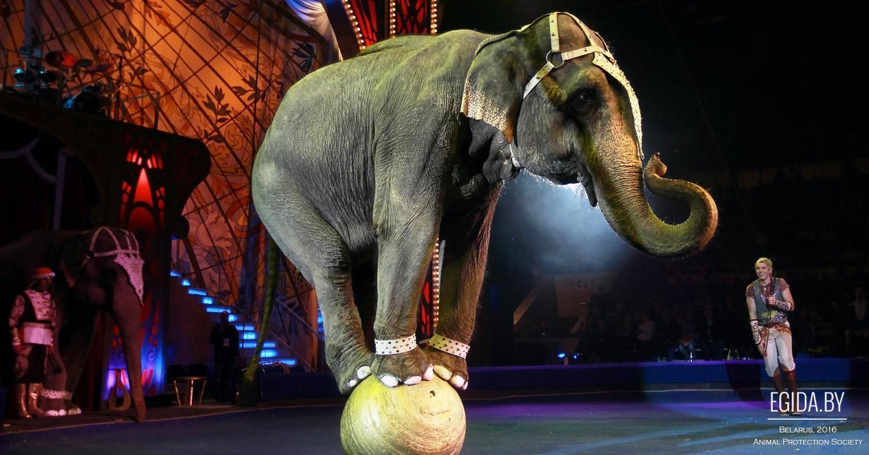 Купить билеты в цирк в минске через интернет билеты в театр камерный