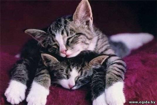 почему кошки сосут ткань