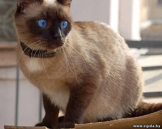 Что сделать чтоб коты не метили