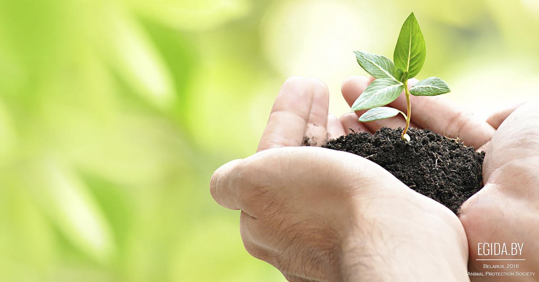 поздравления защита растений сделан