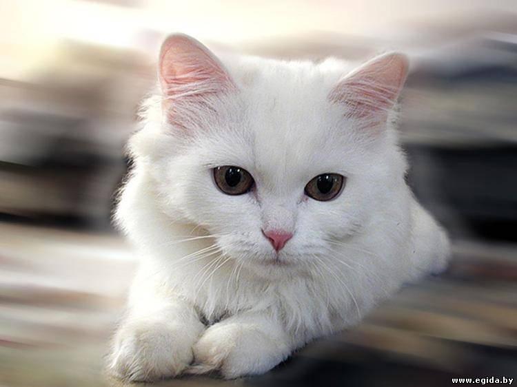 Проблема кошачьего хламидиоза