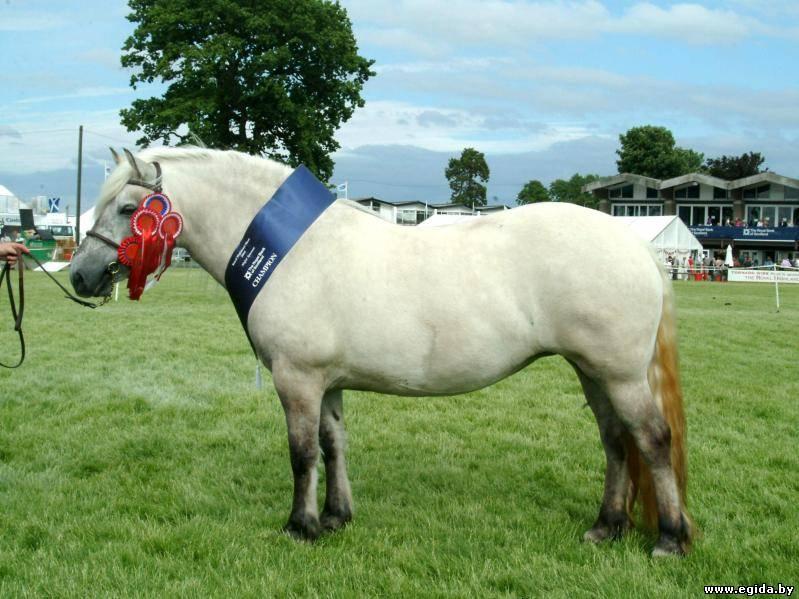 horse exertional rhabdomyolysis essay
