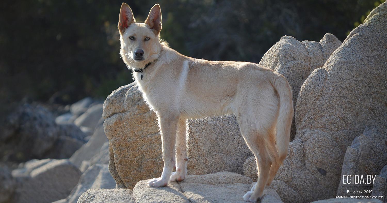 фото собаки породы кан де паллейро