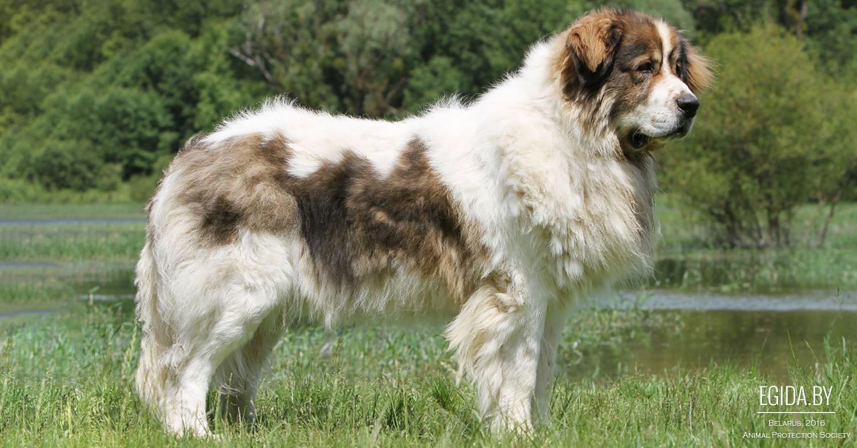 журнал звери выпуск про собаку няньку