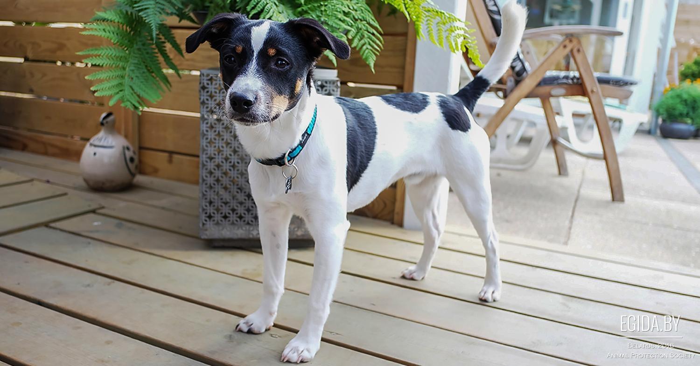Породы собак полный список пород собак с фото породы